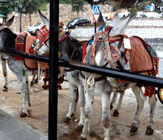 friendly Burro Taxis